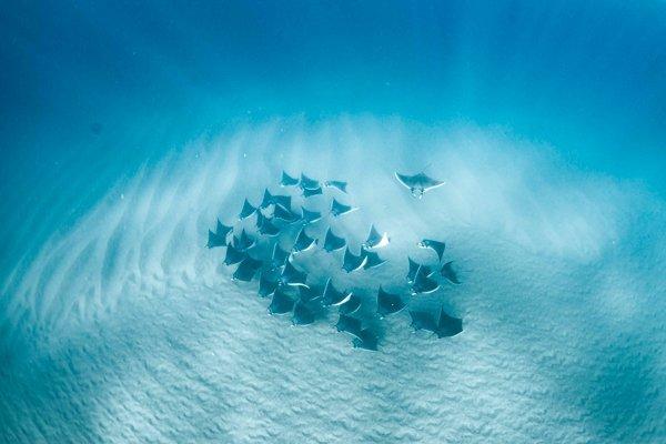 Mobula Ray Snorkeling Tour