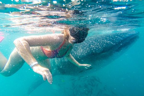 Swiming With Whale Sharks Tour
