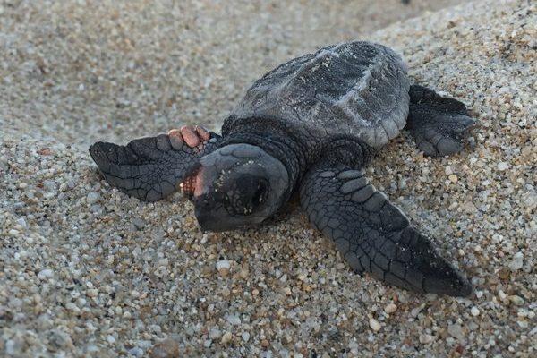 Turtle Release Program
