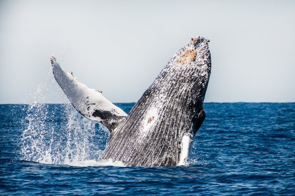 Whale Watching in San Jose del Cabo-6